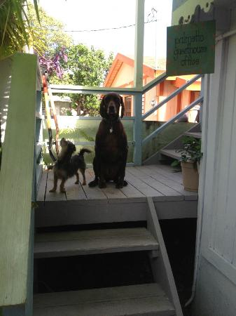Palmetto Guesthouse: Guesthouse pets Poppy (little) and Jock (large)