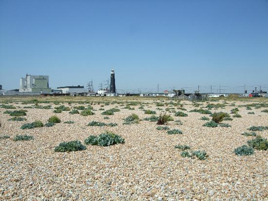 Dungeness Shingle and Old Lighthouse