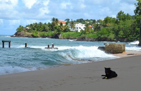 Sandals Regency La Toc Golf Resort and Spa: The beach