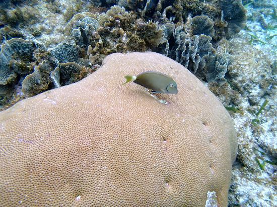Mayan Princess Beach & Dive Resort: Beautiful fish and corel