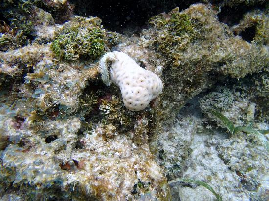 Mayan Princess Beach & Dive Resort: sea worm and sponge