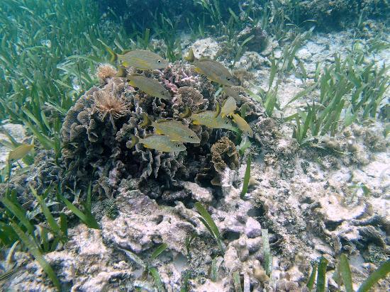 Mayan Princess Beach & Dive Resort: Fish feeding around coral