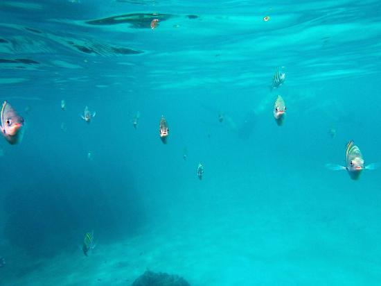 Mayan Princess Beach & Dive Resort: like a scene out of Parana...lol