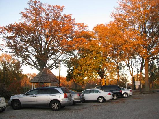 The Historic Powhatan Resort: More lovely colorful foliage