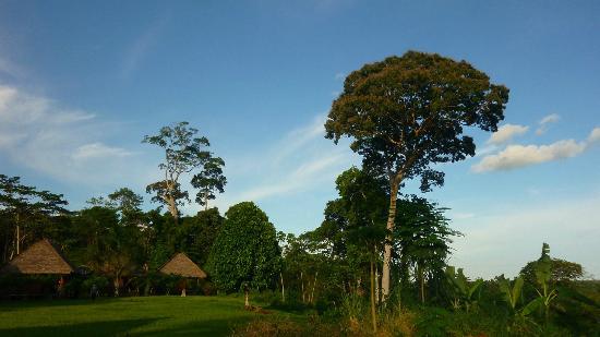 Estancia Bello Horizonte : Chambre et Forêt