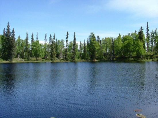 Escape for Two Bed & Breakfast: View from the Moose Cabin deck