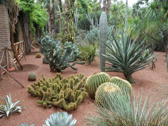 vegetacion de cactus diferentes picture of jardin majorelle marrakech tripadvisor. Black Bedroom Furniture Sets. Home Design Ideas