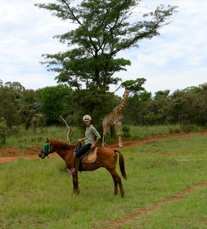 Horse Safari - Picture of Horseback Africa, Pretoria ...