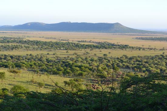 Serengeti Serena Safari Lodge: Vista desde la habitación