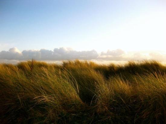 Victoria Hotel: Sand dunes at Pwllheli beach