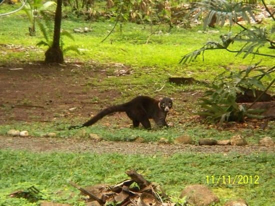Finca Exotica Ecolodge: Just one of the many local residents