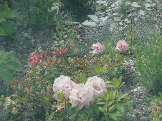愛慕皇后城B&B旅館: 花園裡的花