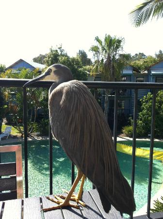 Noosa Lakes Resort: if you are scared of birds would not recommend!