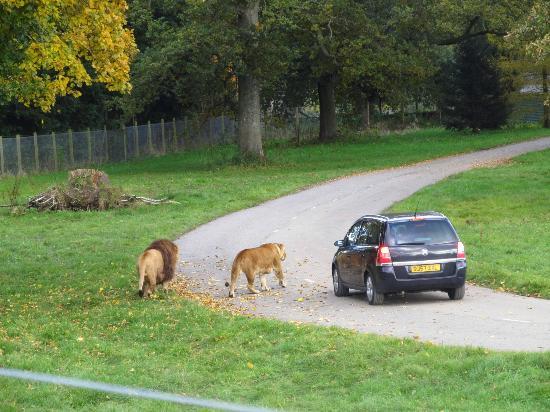 safari area where cars drive through animals roam