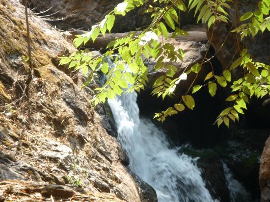 Nature Nirvana: Mini waterfall