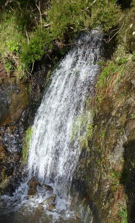 Homewood Bay Lodge: Scenic waterfalls on the property