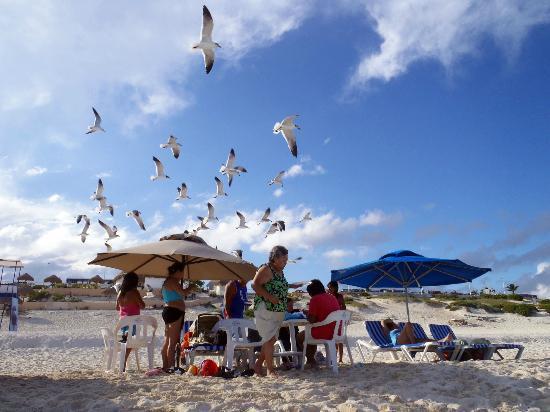 Playa Delfines: Stealing food, eh?