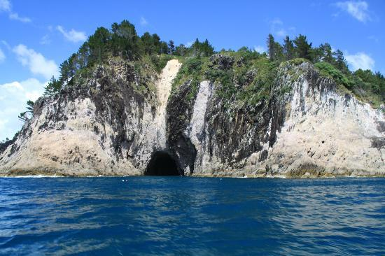 cathedral cove scenic cruises