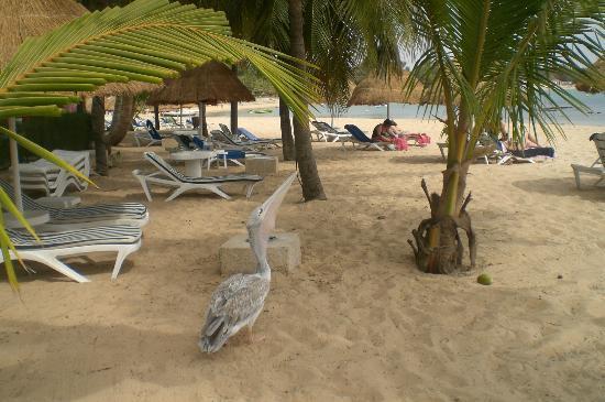 Les Bougainvillees : coté plage simpa