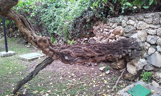 Jardin Botanico Molino de Inca: Capricho de la Naturaleza.