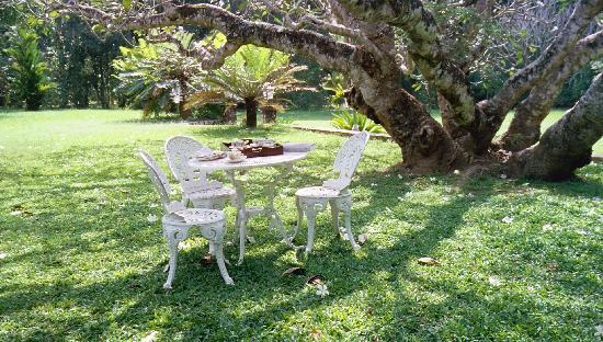 Horathapola Estate: Tea in the garden