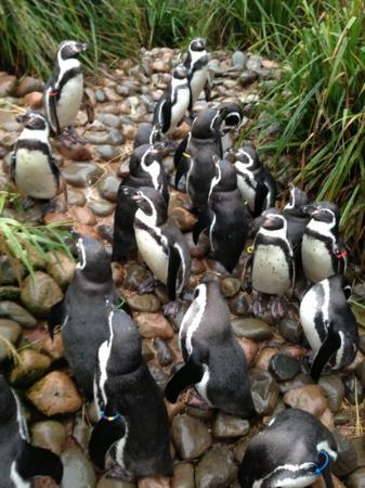 South Lakes Safari Zoo: pic8