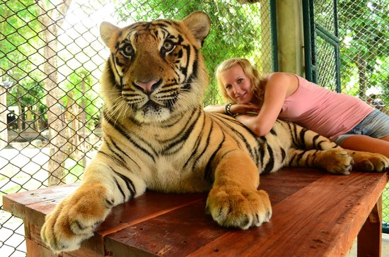 Kavin's Diary: Tiger – The Biggest Cat in the World |Biggest White Tiger In The World