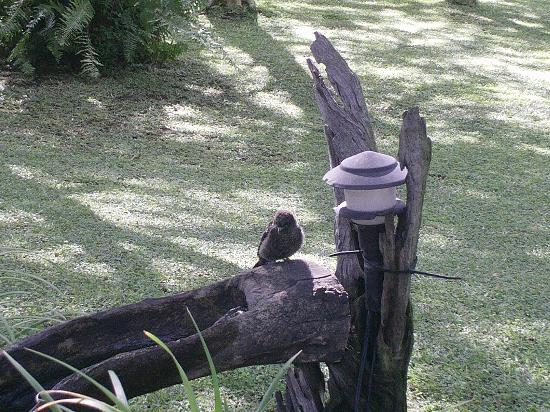 Sunbird Lodge: Garden area.....lots of wonderful birds around