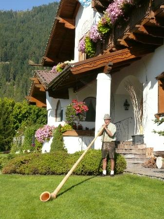 Abendblume: Alpen Horn