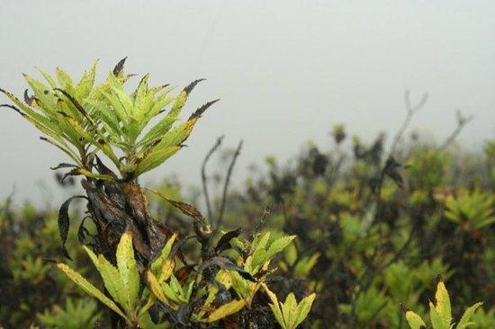 Ol Doinyo Lengai: moist and green