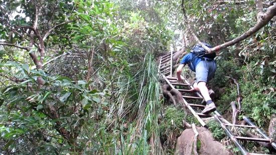 Wuzhishan Wolong Mountain: Then there were the ladders