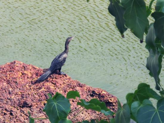 Dwarka Eco Beach Resort: There is lots to enjoy - birds and wildlife