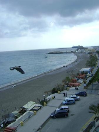 Hotel Mediterranean: Θεα με τον γλαρο παρεα