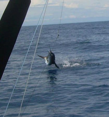 JP Sport Fishing Tours: Genie's Sail Airborne