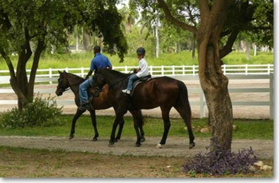 Half Moon Equestrian Center: Beginners Rides