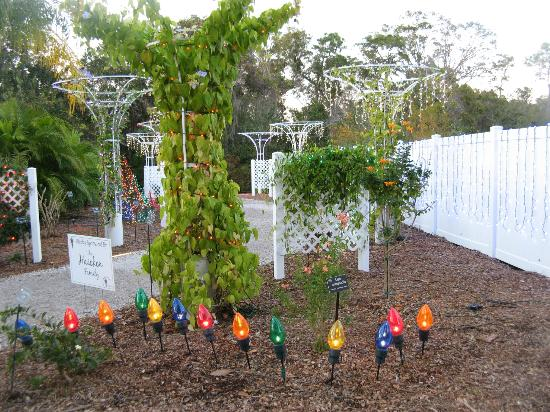 Wedding Garden Area Picture Of Florida Botanical Gardens Largo Tripadvisor