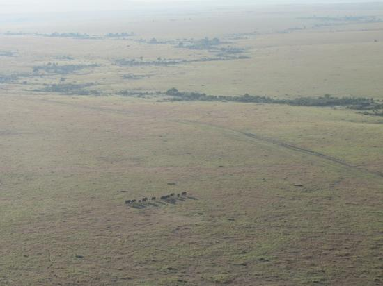 Naibor Camp : Elephants on the move (taken from balloon)