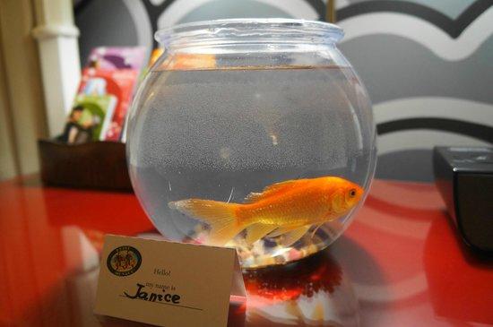 Kimpton Hotel Monaco Seattle:                   Goldfish
