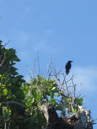 Maria Islands Nature Reserve: bird