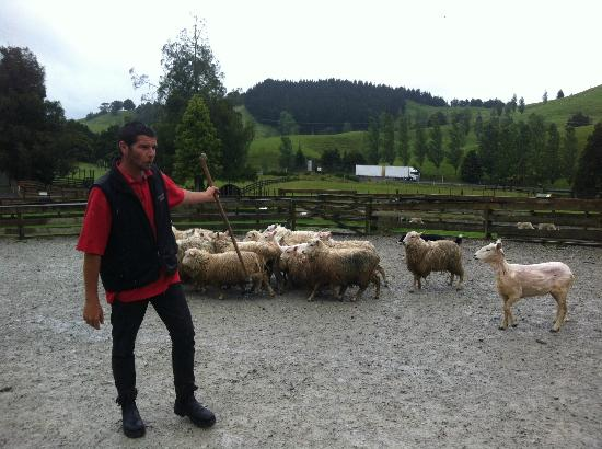Sheepworld : Amazing Rob