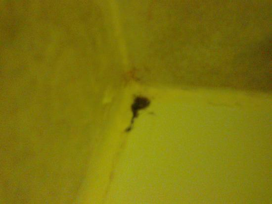 Travelodge Dublin Airport South Hotel : Mould in bathroom