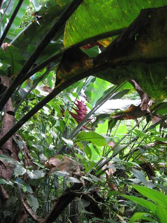 Barre de L'Isle Trail: flower and plant life