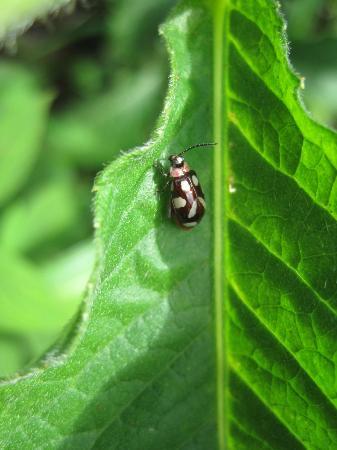 Barre de L'Isle Trail: bug