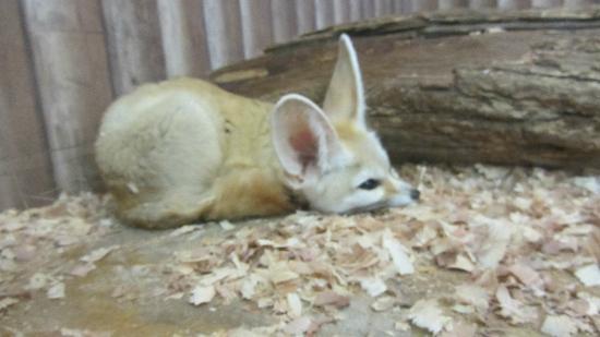 猛禽類のバードショー - kuva: Nasu Animal Kingdom, Nasu-machi - TripAdvisor