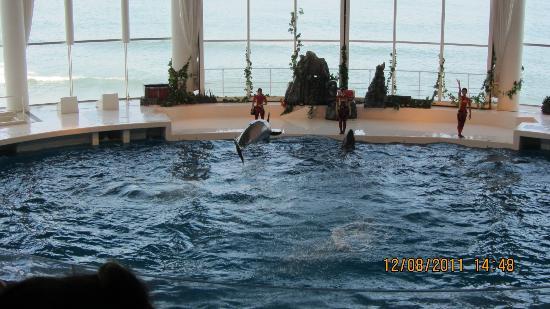 紅クラゲが可愛い - Foto di Aqua World Ibaraki Prefectural Oarai Aquarium, Oarai-machi...