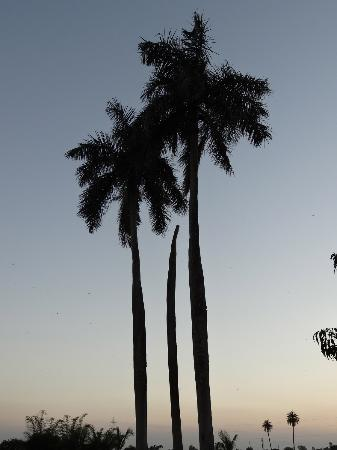 Hotel Jhira Bagh Palace: Trees at sunset