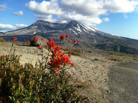 Mount St. Helens : View of Mt St Helens