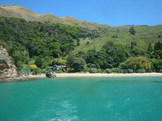 Pelorus Mail Boat: Beautiful colours in Pelorus Sound
