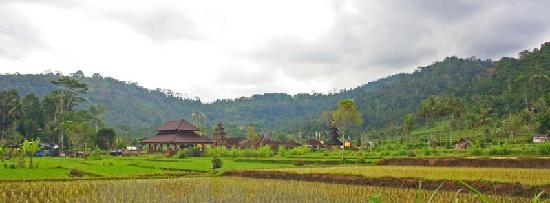 Wangsean Village: Rice field view in Wangsean