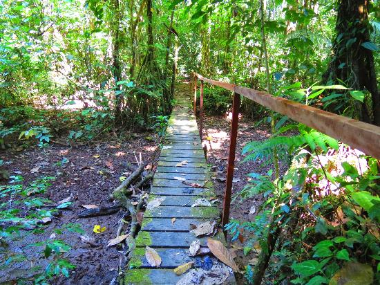 Tambopata Research Center: On one of the many hikes